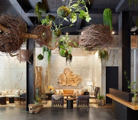 Benefits of Plants Beyond Visual Appeal